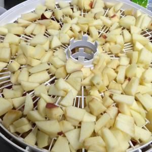 犬用おやつ 乾燥リンゴ