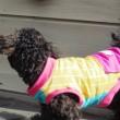 犬の服を自分で作る ニット素材